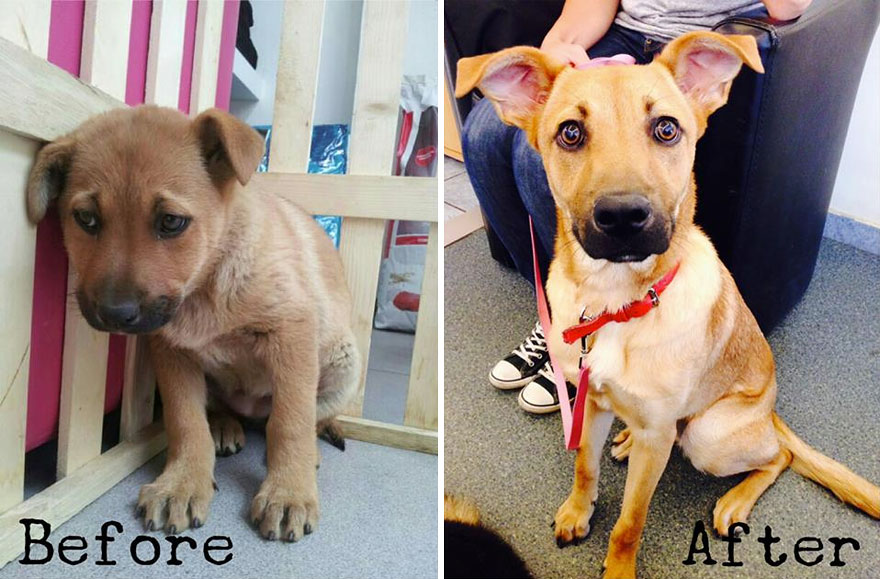 pet-adoption-before-and-after-2