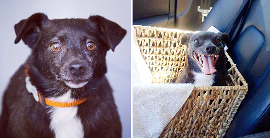 pet-adoption-before-and-after-6