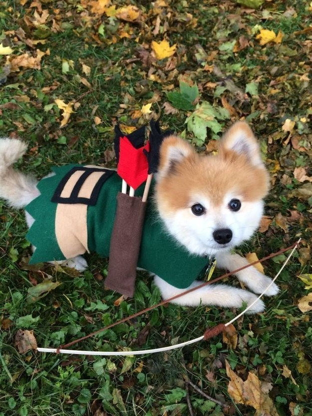 Robin Hood & 23 Insanely Crafty Halloween Costumes For Your Dog