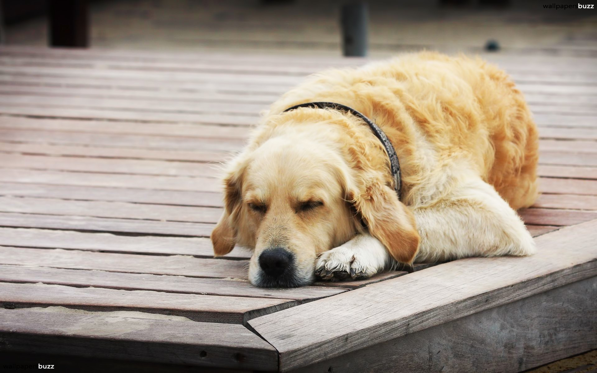 tired-dog-featured
