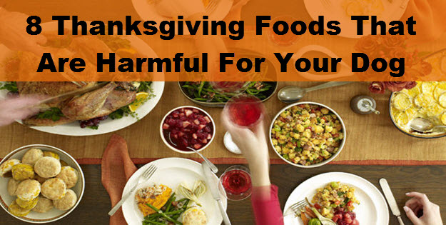 8 Thanksgiving Foods That Pose A Real Danger To Your Dog