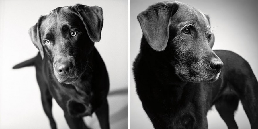 how-dogs-grow-old-in dog-years