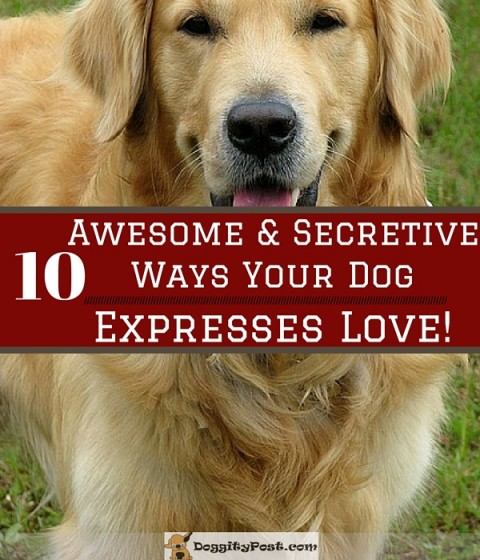 10 Awesome and Secretive Ways Your Dog Expresses Love
